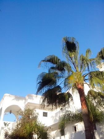 Royal Decameron Tafoukt Beach Hotel: Jardin