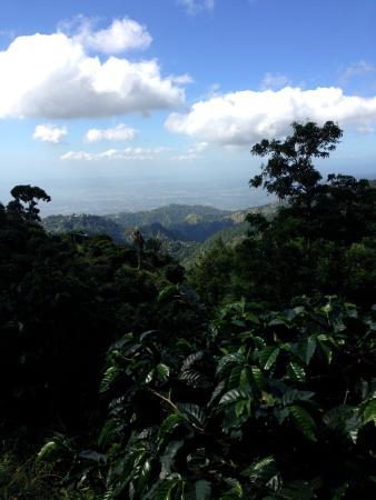Blue Mountain Experience: Вид на Кингстон