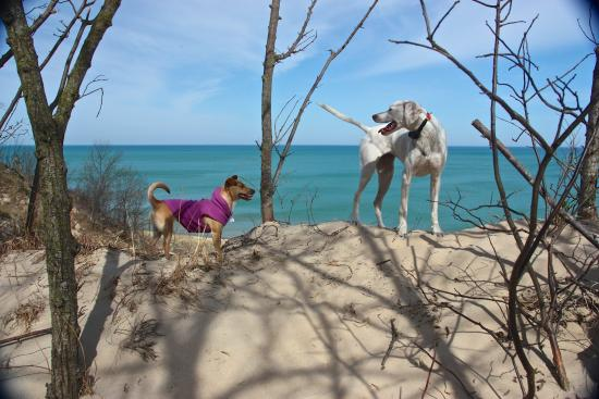 Dogs at the Indiana Dunes