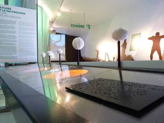 SauveTerre Musée de Préhistoire