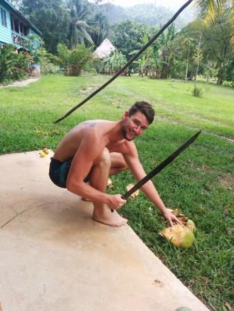Hummingbird Guest Lodge & Hostel: fresh coconuts!