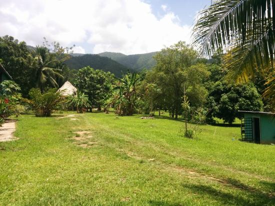 Hummingbird Guest Lodge & Hostel : jungle view
