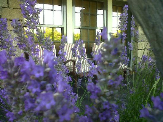 Casa de Santo Antonio de Britiande: Lavenders at the porch