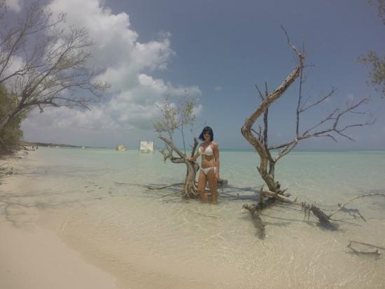 Ane qui se prom ne sur la plage picture of melia for Jardines del rey