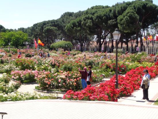 Rosaleda gardens picture of jardines de la rosaleda for Jardines 29 madrid