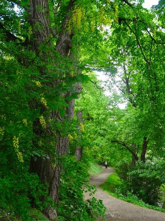 Vienna Woods: Flowering trees along pathway in the Beethovengang, Nussdorf