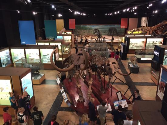University Of Michigan Museum Of Natural History Ann Arbor Mi
