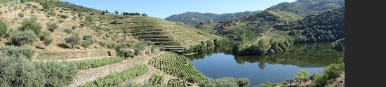Фолгоса, Португалия: Vue sur le Tejo et les vignes du domaine