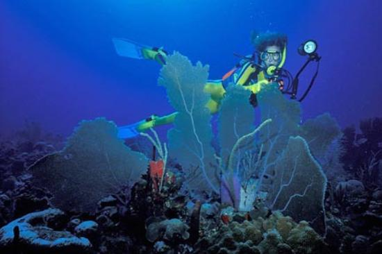 Scuba diving in the clear waters of St. Kitts