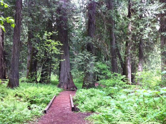 Ross Creek Cedar Grove Scenic Area
