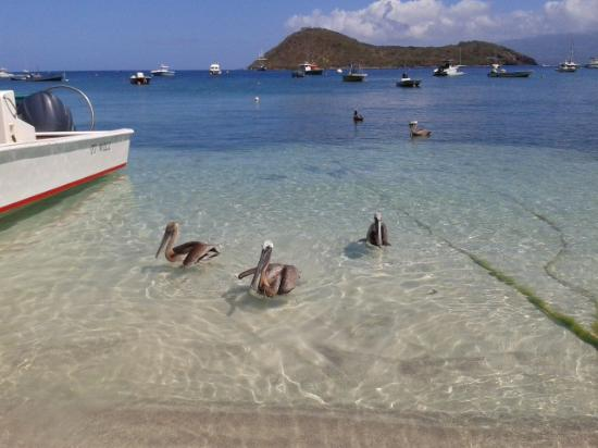Les Saintes Photo