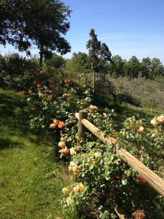 Agriturismo Poggio al Sole Aufnahme