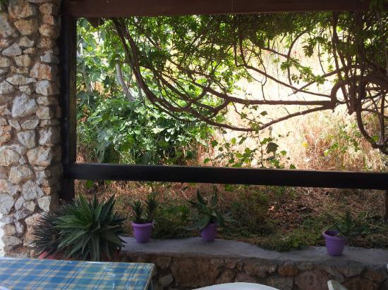 Atlantis Hotel & Studios: baksidan där jag åt min frukost ibland,skönt med skugga
