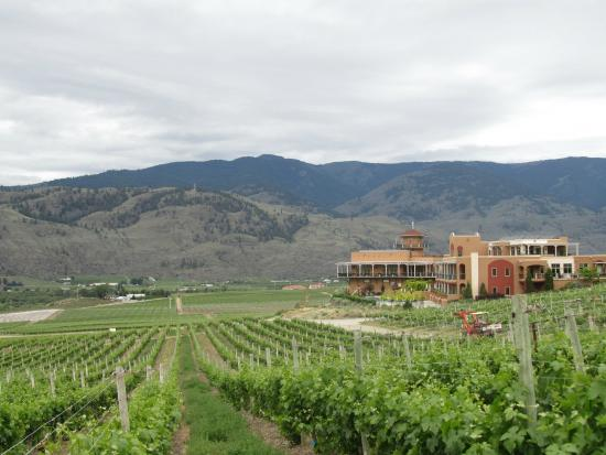 Burrowing Owl Estate Winery Guest House: Look across the vineyard at Burrowing Owl