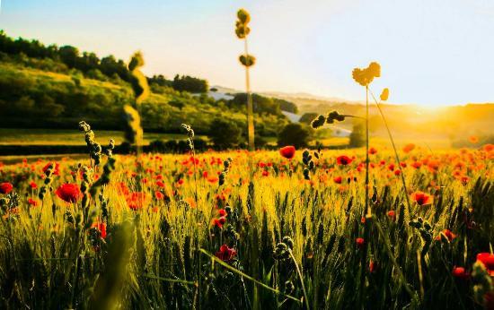 Agriturismo La Sorgente : La natura nel mese di Giugno