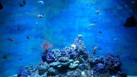 Lakes Aquarium: one of the tanks!