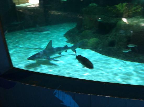 Feeding Stingrays Picture Of Florida Keys Aquarium