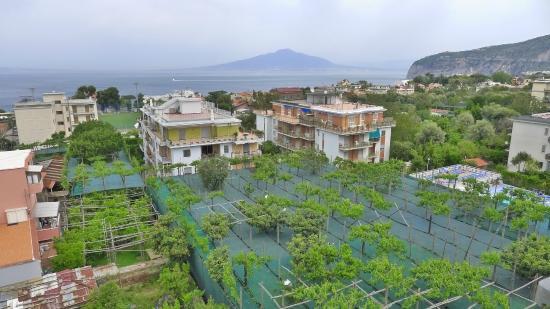 Hotel Zi Teresa: View of Vesuvius from roof terrace over lemon groves