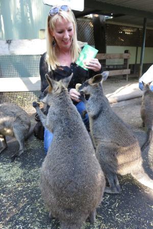 Sydney Great Escapes - Blue Mountains Day Tours : Featherdale Park
