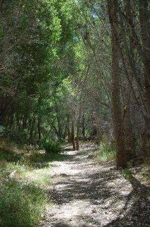Hassayampa River Preserve: Shade trees along the Lion Trail