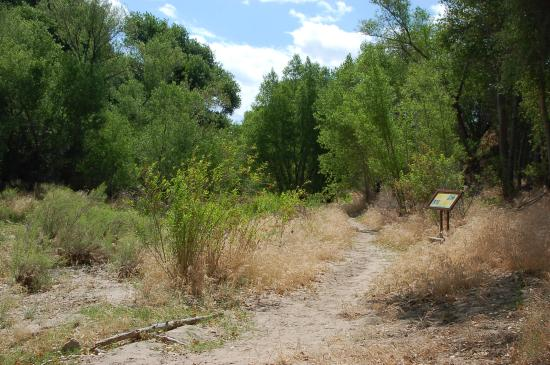 Hassayampa River Preserve: Parts of the Lion Trail go through sand near the river