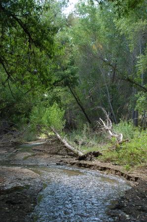 Hassayampa River Preserve: Hassayampa River through the riparian forest
