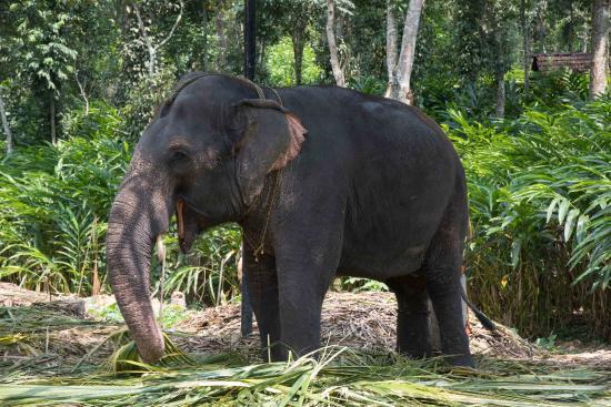 Kerala House: Elephant farm