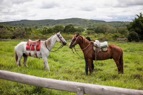 Padre Bernardo: Cavalos