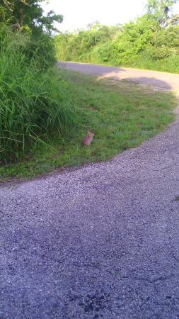 Lake Corpus Christi State Park: rabbit lake cc