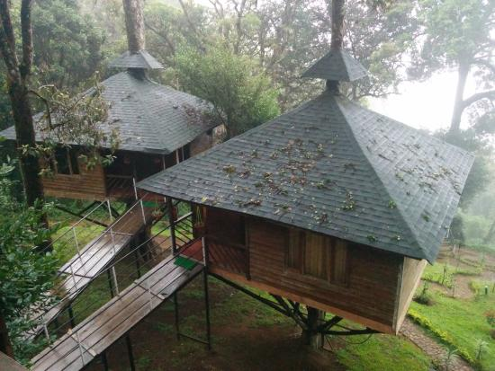 Tree House Picture Of Nature Zone Resort Munnar