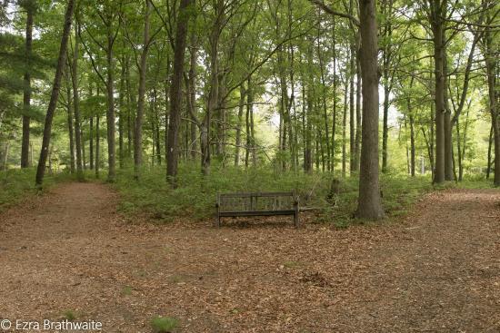 Connetquot River State Park Preserve: Woods Crosspath
