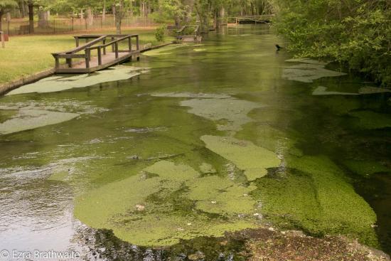 Connetquot River State Park Preserve: Fish Pond