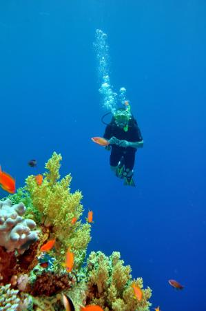 Diving in Sharm el Sheikh