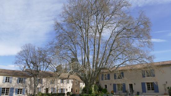 Domaine de Bournereau: Domaine du Bornereau - Gartenansicht