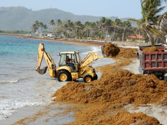 Coconut Bay Beach Resort Spa Daily Seaweed Removal This Was Particularly Bad