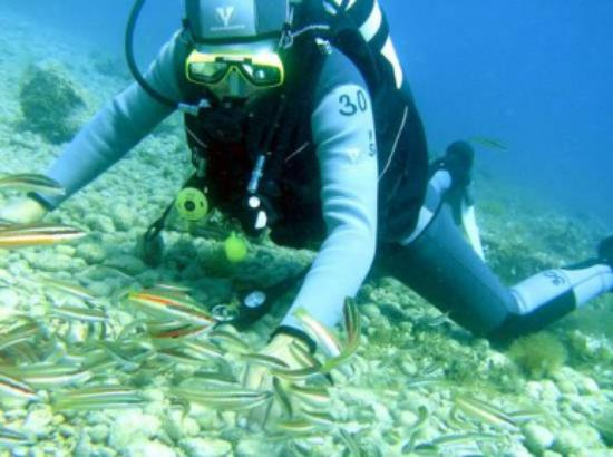 Rabac, Kroasia: Diving on Girandella Beach