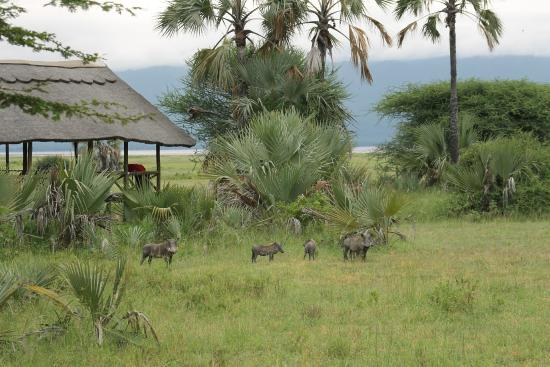 Maramboi Tented Camp: Animals all over