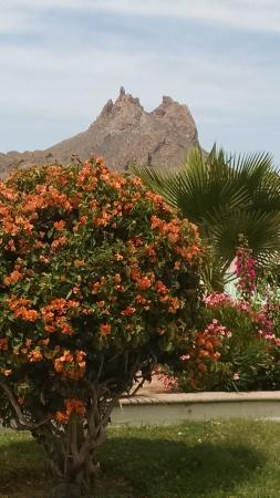 Posada Condominiums & Resort : Colorful flowers everywhere and views in all directions Tetekawi here