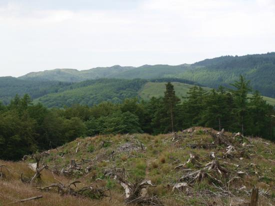 Grizedale, UK: View