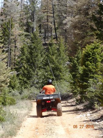 Cedar City, UT: ATV Trail through the woods