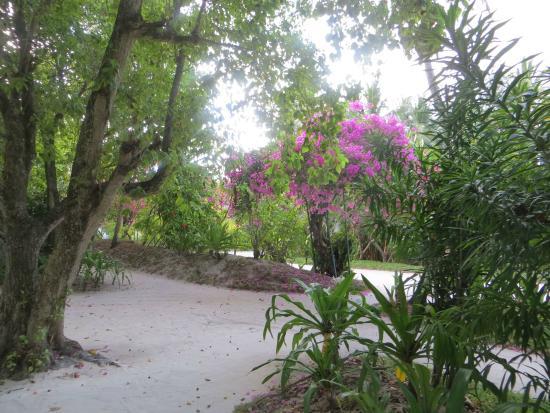 Kuramathi: Jardines