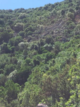 Oasi Wwf Monte Arcosu