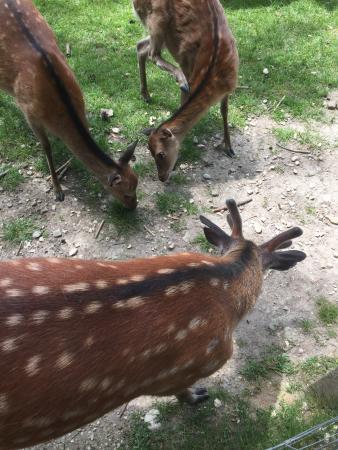 Tier - und Wildpark Allensbach Bodensee
