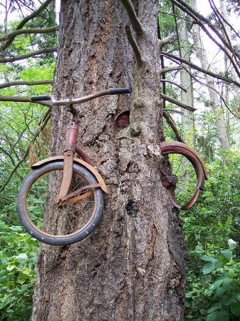 Vashon, WA: The bike in a tree in 2006.