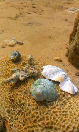 Bailan Beach : На пляже