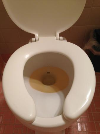 Monticello, IN: That's not pee. That's the color of the water coming out of the toilet in our SECOND room.