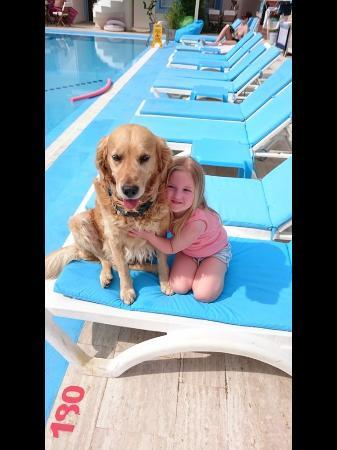 Merve Apartments: Hotel dog pasha
