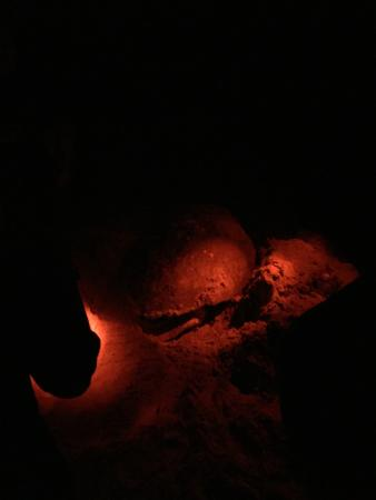 Hobe Sound Nature Center : Nightscope view of turtle egg laying!