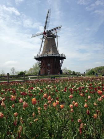 Residence Inn Holland : Authentic Dutch Windmill in Windmill Island Gardens