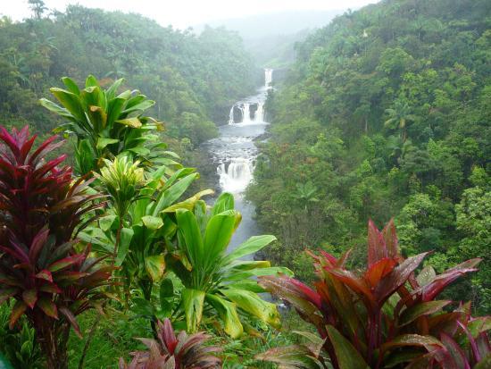 Umauma Falls: Beautiful falls-even in the rain!